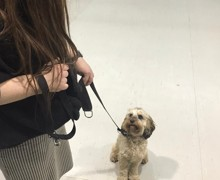 Being a good girl at puppy training class feb 2020